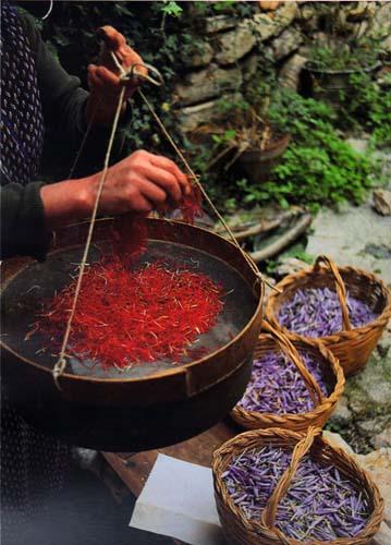 Quel fiore viola tra terre e pietre vincenzo battista for Portico dello schermo prefabbricato